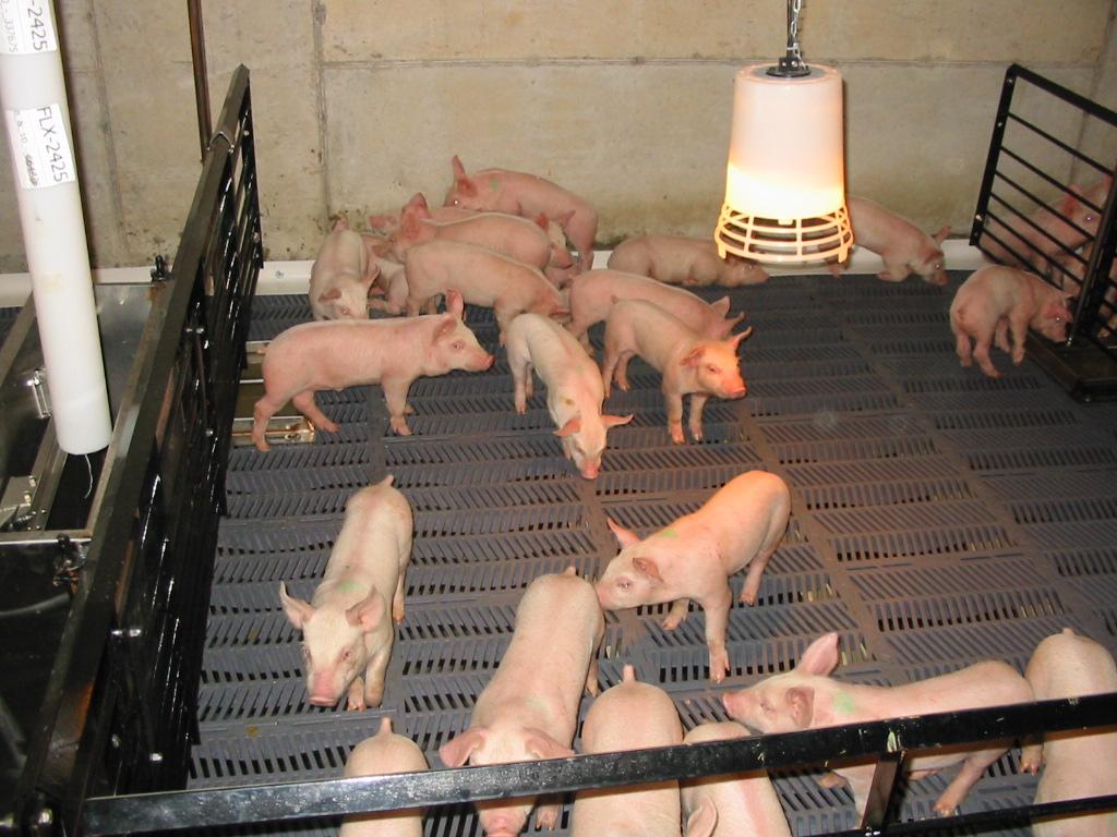 Pig Preliminaries