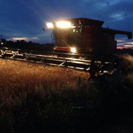 Wheat Harvest at sunset